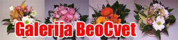BeoCvet galerija nasih radova